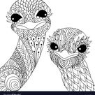 Two ostriches vector image on VectorStock