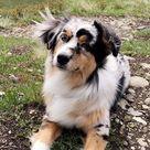 6 Best Loyal, Hardworking Farm Dog Breeds - DogTime