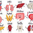 Healthy Body Organs Internal Human Organs Characters