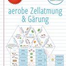 Aerobe Zellatmung und Gärung - 3x Aktivitäten und Spiele