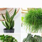 12 Favorite Low Light Plants