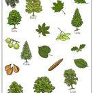 Arbeitsblätter Wald
