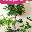 Gute Luft dank diesen Zimmerpflanzen