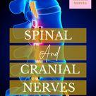 Nursing Nervous System   Spinal and Cranial Nerves