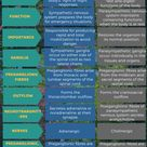 Difference Between Sympathetic and Parasympathetic Nervous System   Compare the Difference Between Similar Terms