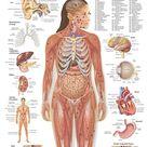 inside human body