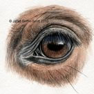 Perfect Your Horse Drawings With a Guide on How to Draw Eyes