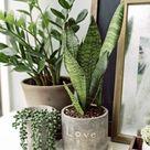 7 tips om een mooi plantenhoekje te creëren