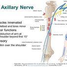 AccessPhysiotherapy - Brachial Plexus and Peripheral Nerves