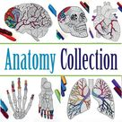 Anatomy Collection  Set of 10 PDF Coloring Pages | Etsy