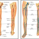 Ch. 20 Peripheral Vascular System & Lymphatic System - Nursing 3065 with Kubiet at University of Central Florida - StudyBlue