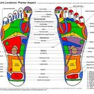 Reflexology Charts for Student Study and Practitioner Guidance. Learn Reflexology the Easy Way. Reflexology Study Charts in Colour by Phil Chave, The Haven Healing Centre
