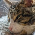 How to reward or punish a cat?