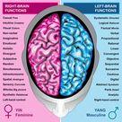 Human Brain Left And Right Functions Stock Illustration - Illustration of hemisphere, genius: 18614297