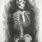 Human Anatomy Skeleton Torso by RabidBrains on DeviantArt