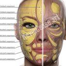 Aesthetic Creator anatomy images