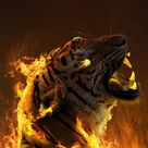 Burning Tiger IPhone Wallpaper - IPhone Wallpapers