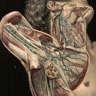 1839 Vintage Anatomy  Illustration