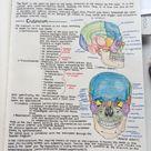 The Oxford Handbook of Medblr Photo