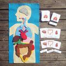 Human organs felt play mat Montessori anatomy materials the   Etsy