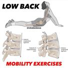 """BACK PAIN🔹️NECK PAIN🔹️MOBILITY on Instagram: """"💥𝐋𝐮𝐦𝐛𝐚𝐫 𝐌𝐨𝐛𝐢𝐥𝐢𝐭𝐲💥 Follow 👉@nomusclepain for daily pain management advice📚  🔎The lumbar spine moves through all three planes of motion…"""""""