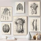 Human Anatomy Artwork Medical Wall Picture Muscle Skeleton Vintage Poster Nordic