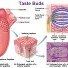 Chemical Sense Taste Gustation