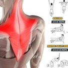 11 Exercises For Developing Bigger Broader And The Best Traps in the Gym - GymGuider.com