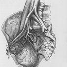 Framed Photo. Human Heart