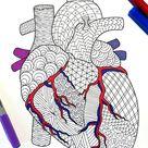 Heart  Human Anatomy  PDF Coloring Page | Etsy