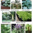 Gardening, Garden plans Auckland, Planting plans