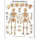 WANGART Human Chart Poster Map Canvas Painting Wall Pictures for Medical Education Doctors Office Classroom Home Decor JY0821 - 70x90cm no frame