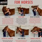 Head and neck stretches
