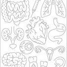 VITAL ORGANS   1 Theme Embroidery Patterns