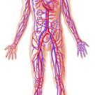 10 Awesome and Little Known Facts About the Human Body