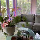 Aesthetic Interior ideas for summer 💖