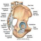 Hip Anatomy Yoga | Understanding the Hips for Yoga | Jason Crandell Yoga Method
