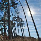 Bäume rascheln, Meeresrauschen - Weststrand und Darßer Ort - Prerow • Home