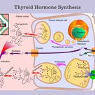 Cruciferous Vegetables and Thyroid Disease ~ The Paleo Mom
