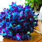 Blue Orchid Wedding