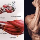 6 Of The Best Forearm Exercises For Muscle Growth And Strength For Proportional Arms - GymGuider.com