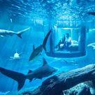 Cool Sharks