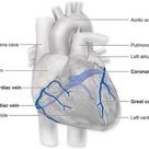 Coronary Circulation : Anatomy Demonstration Video