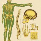Framed Print. Human Skeleton Bones