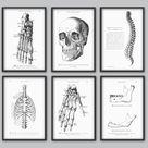 Human Anatomy Print Set of 6, Medical Office Wall Art Decor, Vintage Science Illustrations, skull bones spine