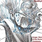 Swollen Occipital Lymph Nodes: Causes and When to See a Doctor