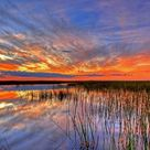 2048x1152 usa, everglades, swamp 2048x1152 Resolution Wallpaper, HD Nature 4K Wallpapers, Images, Photos and Background - Wallpapers Den