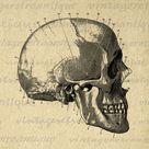 Digital Graphic Skull Diagram Download Printable Antique   Etsy