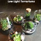 Plants For Terrariums