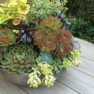 Succulent Bowls